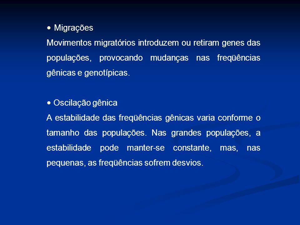 Migrações Movimentos migratórios introduzem ou retiram genes das populações, provocando mudanças nas freqüências gênicas e genotípicas. Oscilação gêni