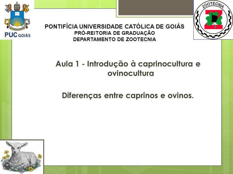 Aula 1 - Introdução à caprinocultura e ovinocultura Diferenças entre caprinos e ovinos. PONTIFÍCIA UNIVERSIDADE CATÓLICA DE GOIÁS PRÓ-REITORIA DE GRAD