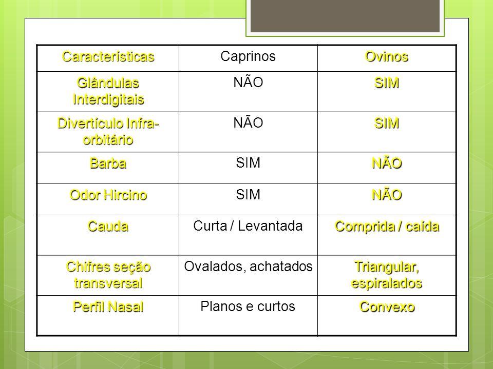 CaracterísticasCaprinosOvinos Glândulas Interdigitais NÃOSIM Divertículo Infra- orbitário NÃOSIM BarbaSIMNÃO Odor Hircino SIMNÃO Cauda Curta / Levanta