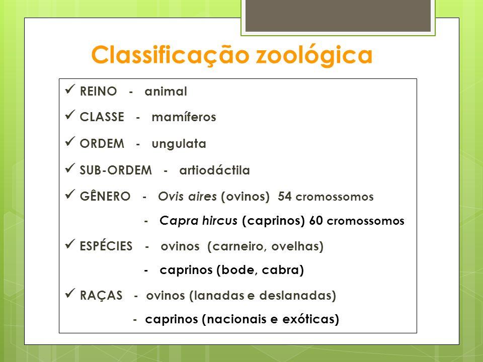 Classificação zoológica REINO - animal CLASSE - mamíferos ORDEM - ungulata SUB-ORDEM - artiodáctila GÊNERO - Ovis aires (ovinos) 54 cromossomos - Capr