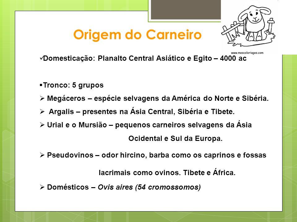Odor Hircino Glandulas de Schietzel (Glândula dos cornos) Caprinos