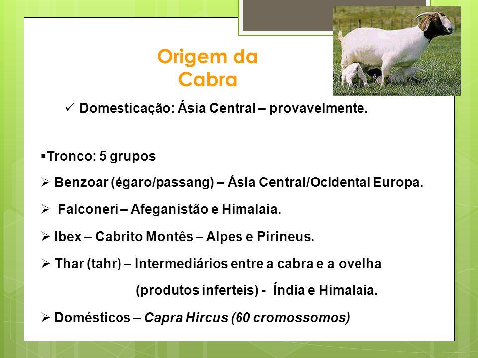 Origem da Cabra Domesticação: Ásia Central – provavelmente. Tronco: 5 grupos Benzoar (égaro/passang) – Ásia Central/Ocidental Europa. Falconeri – Afeg
