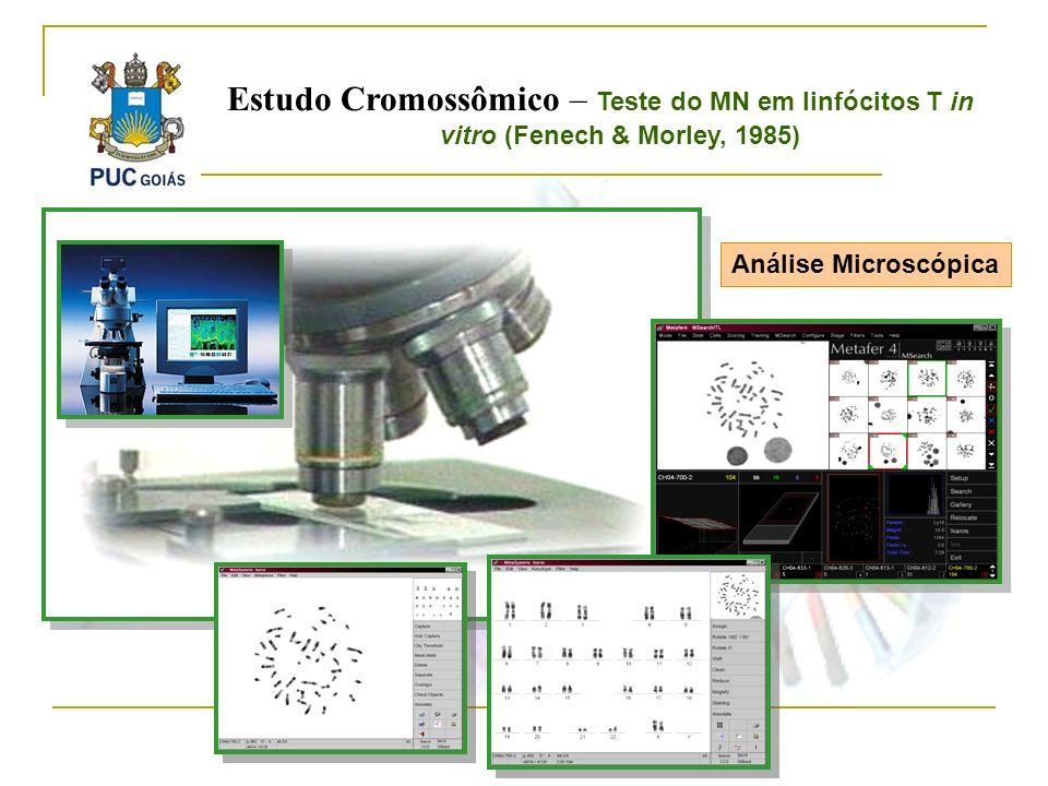 Análise Microscópica Estudo Cromossômico – Teste do MN em linfócitos T in vitro (Fenech & Morley, 1985)