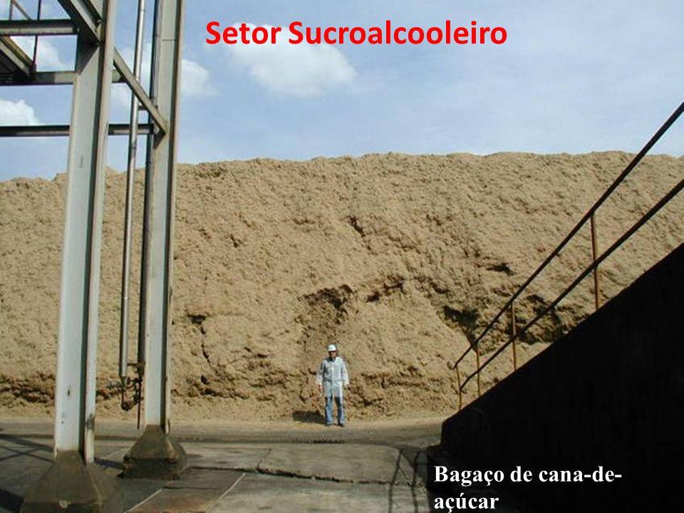 Bagaço de cana-de- açúcar Setor Sucroalcooleiro