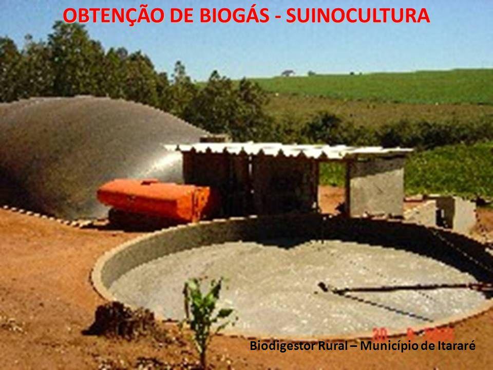 Biodigestor Rural – Município de Itararé OBTENÇÃO DE BIOGÁS - SUINOCULTURA
