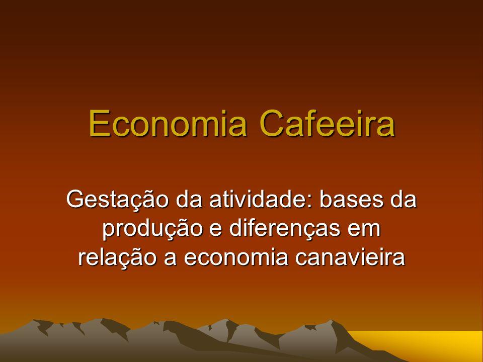 Economia Cafeeira Gestação da atividade: bases da produção e diferenças em relação a economia canavieira