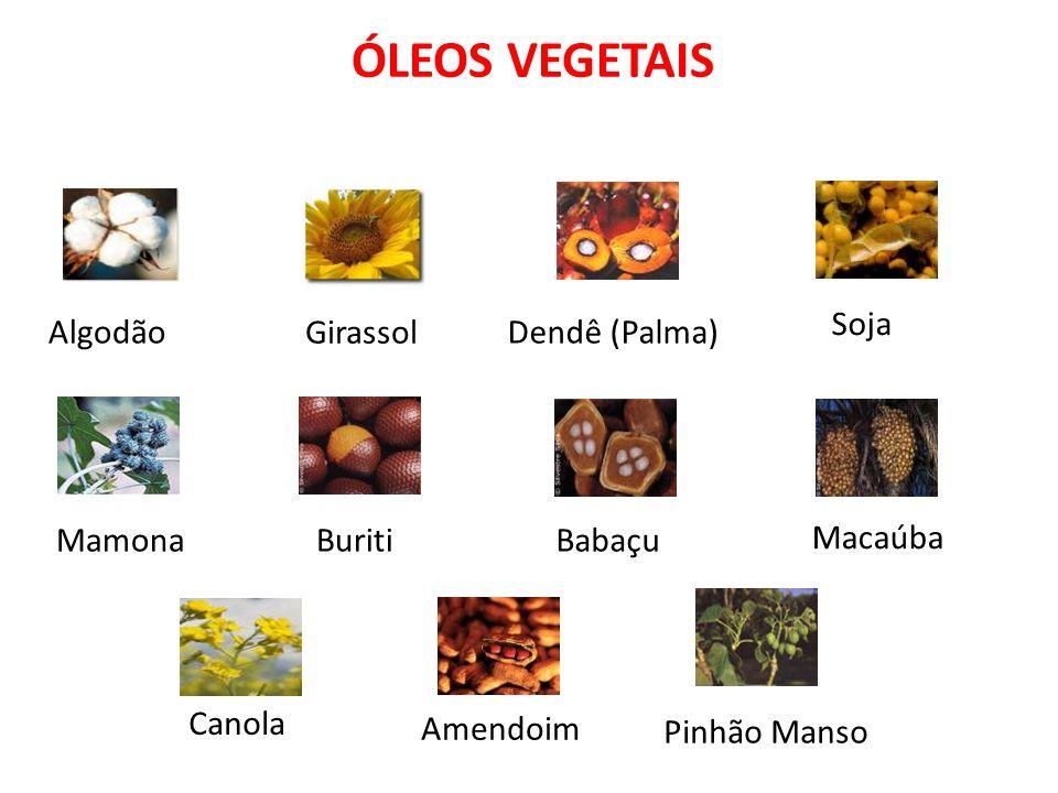ÓLEOS VEGETAIS Soja Dendê (Palma) Girassol Algodão Mamona Buriti Babaçu Macaúba Canola Amendoim Pinhão Manso