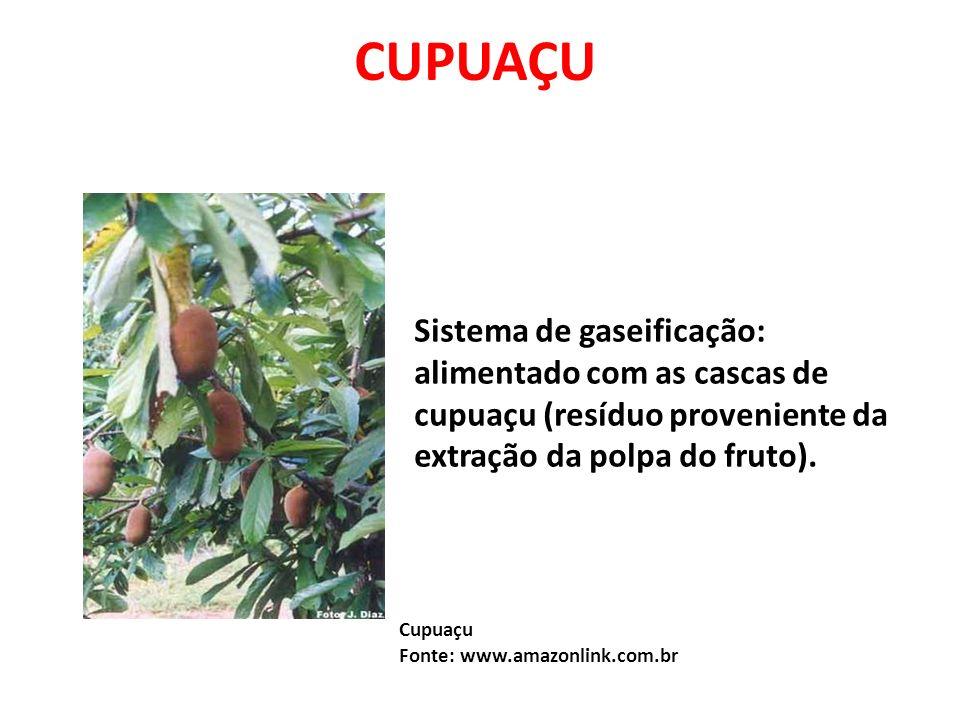 Cupuaçu Fonte: www.amazonlink.com.br Sistema de gaseificação: alimentado com as cascas de cupuaçu (resíduo proveniente da extração da polpa do fruto).