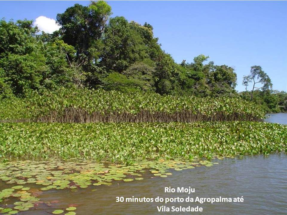 Rio Moju 30 minutos do porto da Agropalma até Vila Soledade