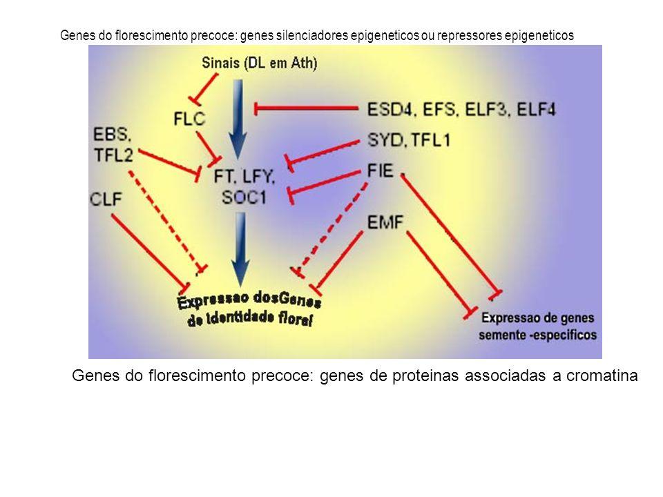 Genes do florescimento precoce: genes silenciadores epigeneticos ou repressores epigeneticos Genes do florescimento precoce: genes de proteinas associ