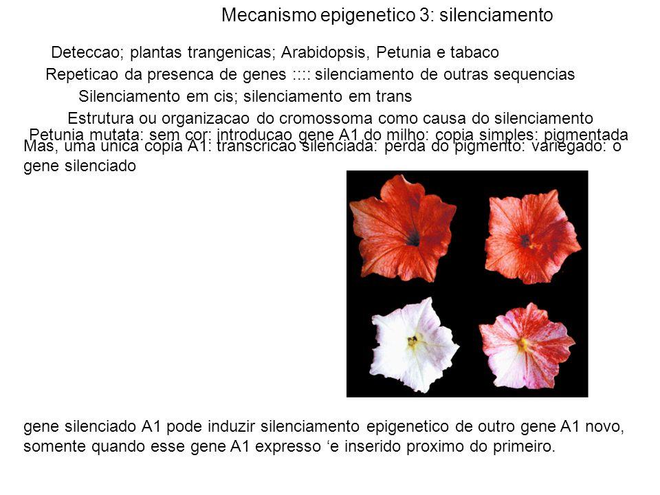 Mecanismo epigenetico 3: silenciamento Deteccao; plantas trangenicas; Arabidopsis, Petunia e tabaco Repeticao da presenca de genes :::: silenciamento de outras sequencias Silenciamento em cis; silenciamento em trans Estrutura ou organizacao do cromossoma como causa do silenciamento Petunia mutata: sem cor: introducao gene A1 do milho: copia simples: pigmentada Mas, uma unica copia A1: transcricao silenciada: perda do pigmento: variegado: o gene silenciado gene silenciado A1 pode induzir silenciamento epigenetico de outro gene A1 novo, somente quando esse gene A1 expresso e inserido proximo do primeiro.