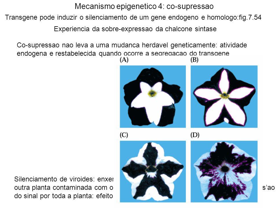 Mecanismo epigenetico 4: co-supressao Transgene pode induzir o silenciamento de um gene endogeno e homologo:fig.7.54 Experiencia da sobre-expressao da