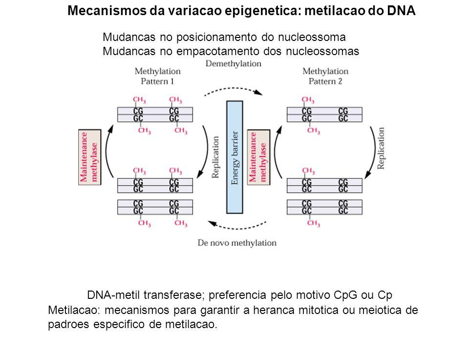 Mecanismos da variacao epigenetica: metilacao do DNA Mudancas no posicionamento do nucleossoma Mudancas no empacotamento dos nucleossomas Modificacoes covalente do nucleossoma Metilacao: mecanismo mais connhecido Metilacao: mecanismos para garantir a heranca mitotica ou meiotica de padroes especifico de metilacao.