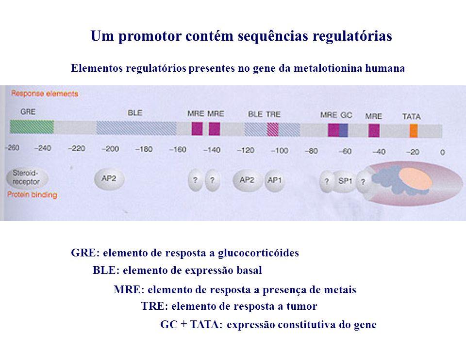 Um promotor contém sequências regulatórias Elementos regulatórios presentes no gene da metalotionina humana GRE: elemento de resposta a glucocorticóides BLE: elemento de expressão basal MRE: elemento de resposta a presença de metais TRE: elemento de resposta a tumor GC + TATA: expressão constitutiva do gene
