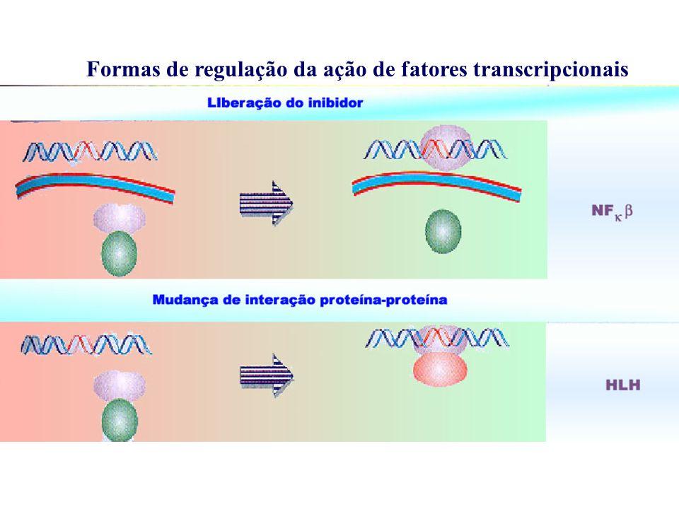 Estudos de promotores em plantas: fusão do promotor com um gene reporter (GUS, Luciferina, GFP)