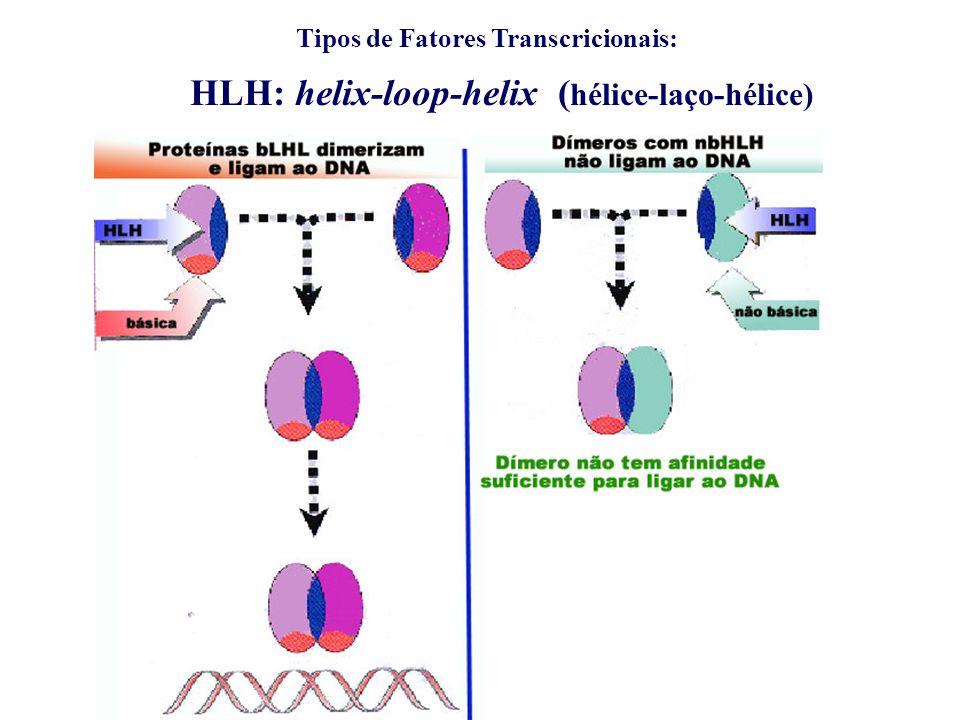 HLH: helix-loop-helix ( hélice-laço-hélice)