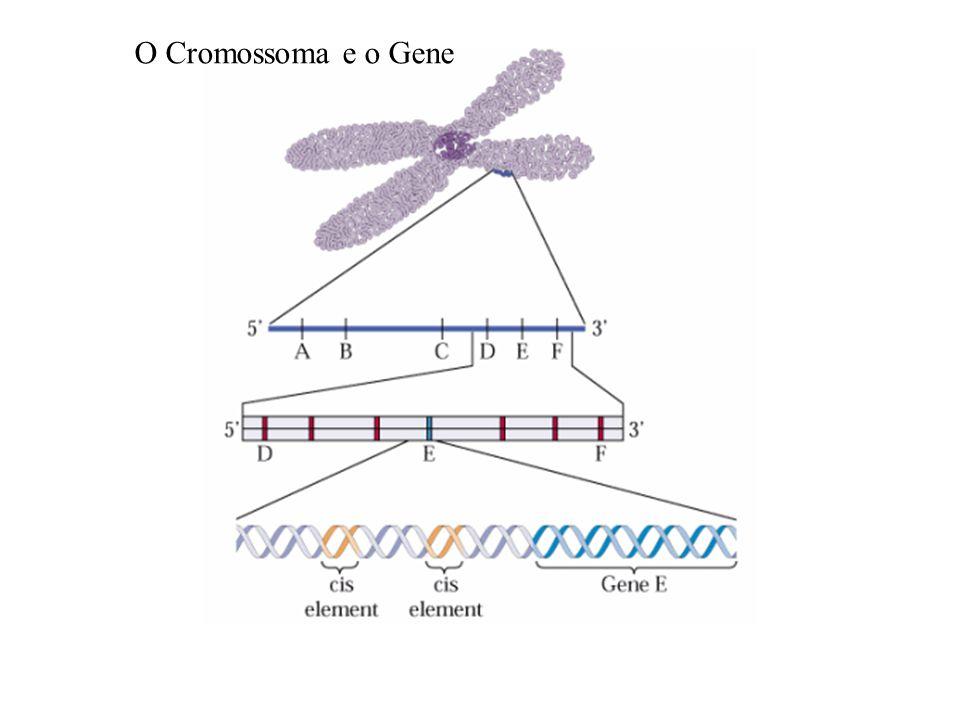 O Cromossoma e o Gene