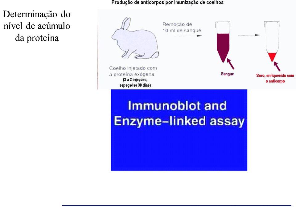Determinação do nível de acúmulo da proteína