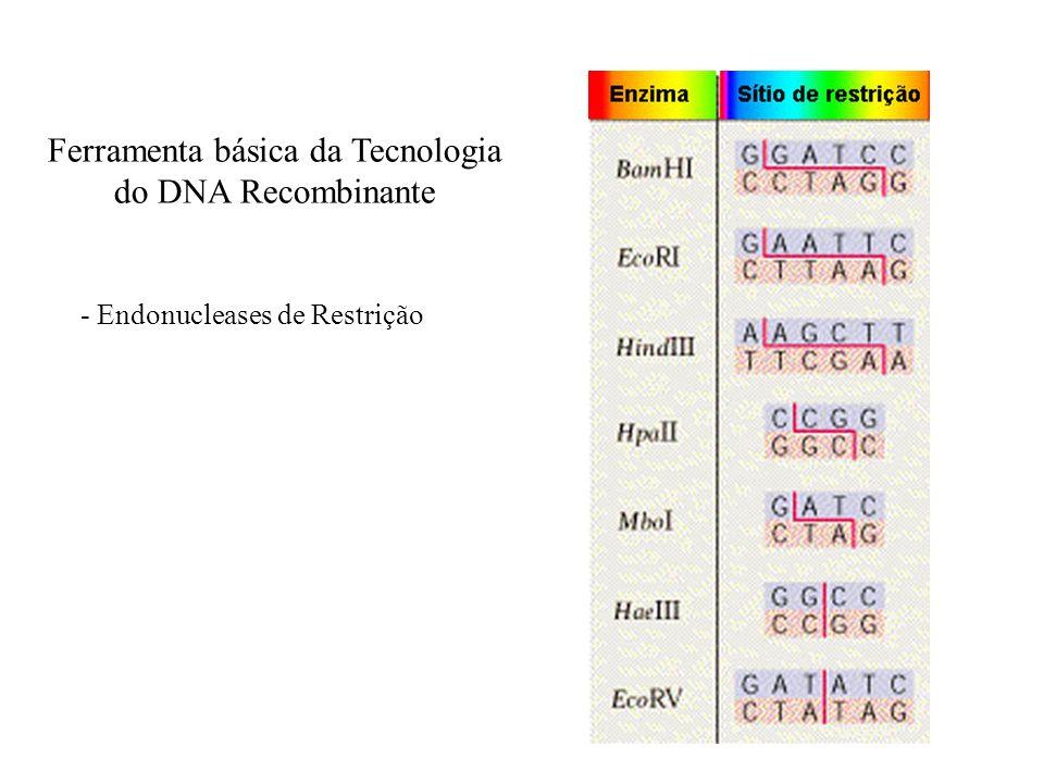 Ferramenta básica da Tecnologia do DNA Recombinante - Endonucleases de Restrição