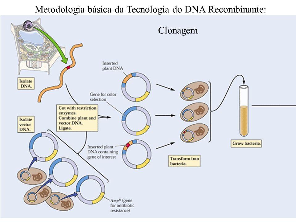 Metodologia básica da Tecnologia do DNA Recombinante: Clonagem