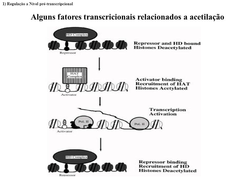 Fatores Transcricionais:diferentes interações entre os ativadores e o complexo de iniciação