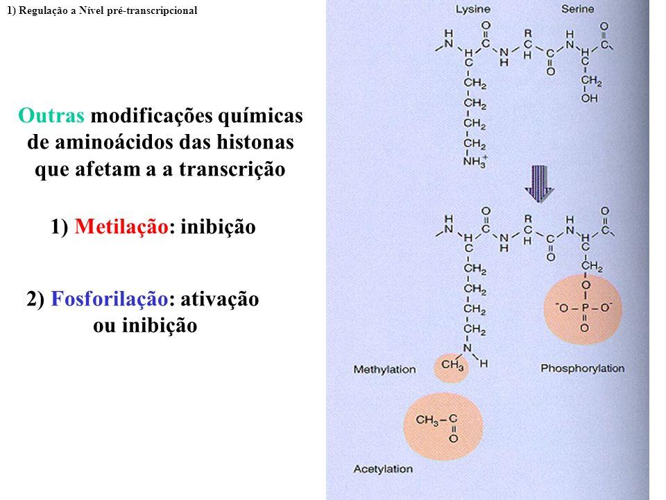 Alguns fatores transcricionais relacionados a acetilação 1) Regulação a Nível pré-transcripcional