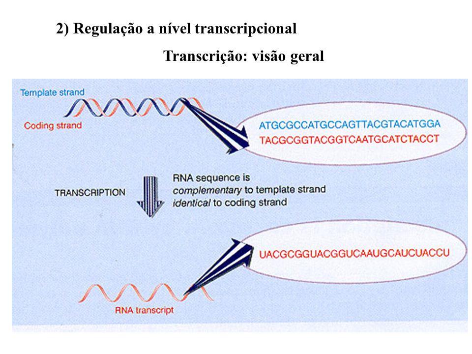 Outras modificações químicas de aminoácidos das histonas que afetam a a transcrição 1) Metilação: inibição 2) Fosforilação: ativação ou inibição 1) Re