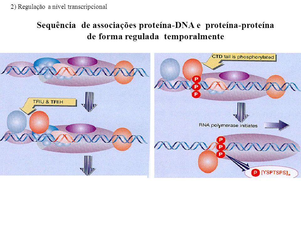 Iniciação da transcrição: Formação do complexo proteico de iniciação da transcrição Sequência de associações proteína-DNA e proteína-proteína de forma