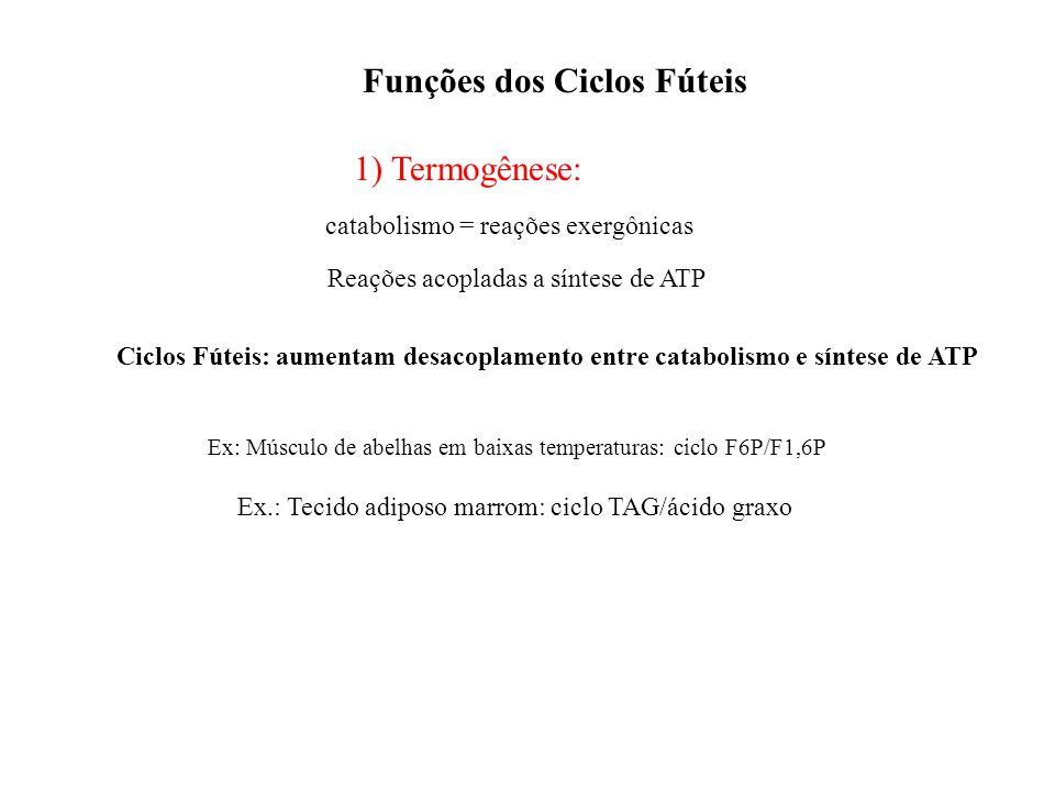 Funções dos Ciclos Fúteis 1) Termogênese: catabolismo = reações exergônicas Reações acopladas a síntese de ATP Ciclos Fúteis: aumentam desacoplamento