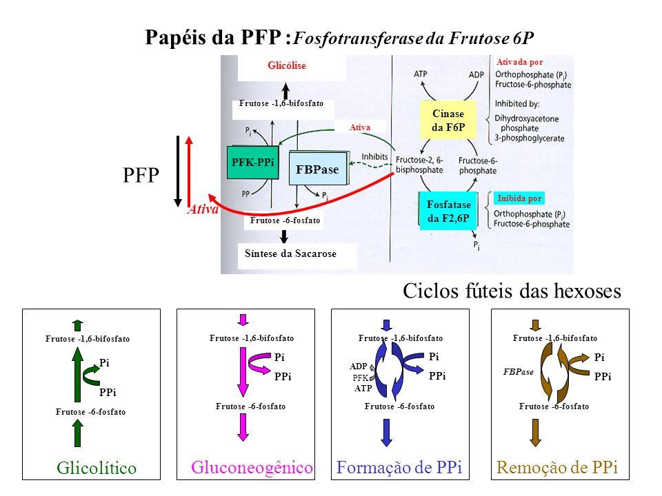 PFK-PPi FBPase Frutose -6-fosfato Frutose -1,6-bifosfato Síntese da Sacarose Glicólise Ativa Ativada por Cinase da F6P Fosfatase da F2,6P Inibida por