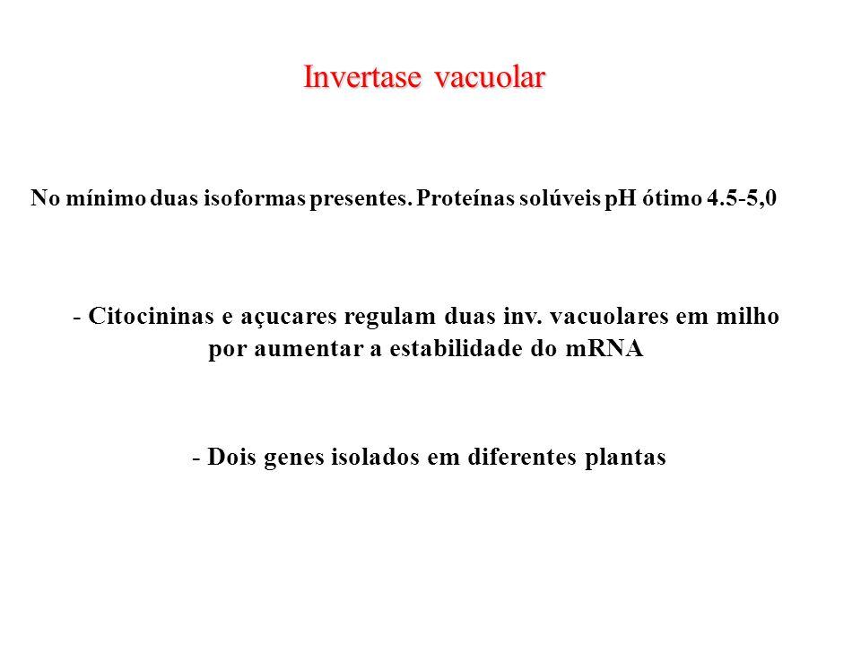 Invertase vacuolar - Citocininas e açucares regulam duas inv. vacuolares em milho por aumentar a estabilidade do mRNA No mínimo duas isoformas present