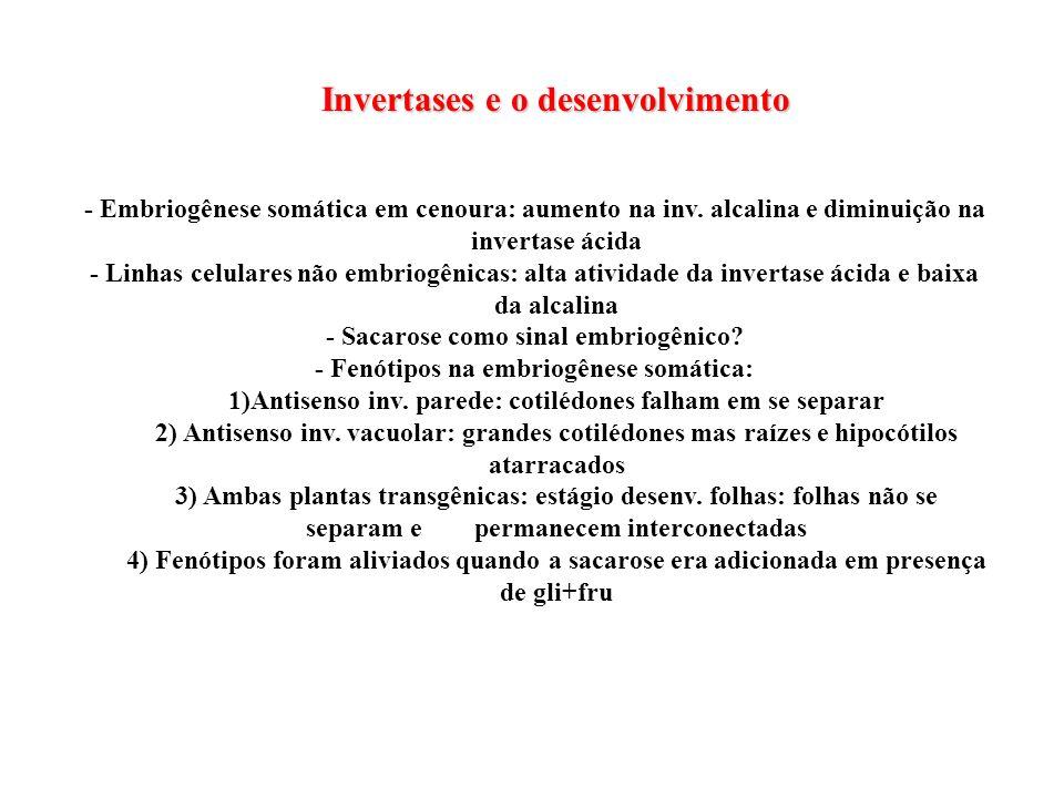 Invertases e o desenvolvimento - Embriogênese somática em cenoura: aumento na inv. alcalina e diminuição na invertase ácida - Linhas celulares não emb