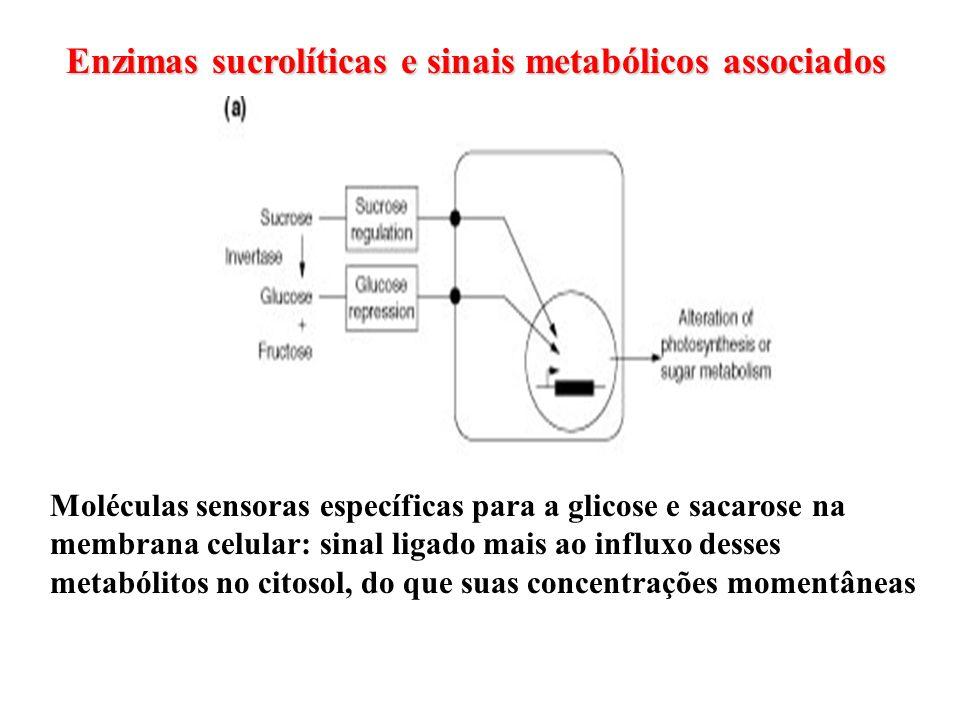 Enzimas sucrolíticas e sinais metabólicos associados Moléculas sensoras específicas para a glicose e sacarose na membrana celular: sinal ligado mais a