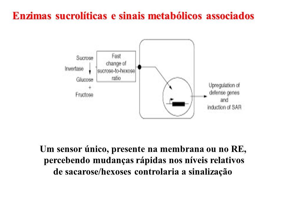 Enzimas sucrolíticas e sinais metabólicos associados Um sensor único, presente na membrana ou no RE, percebendo mudanças rápidas nos níveis relativos