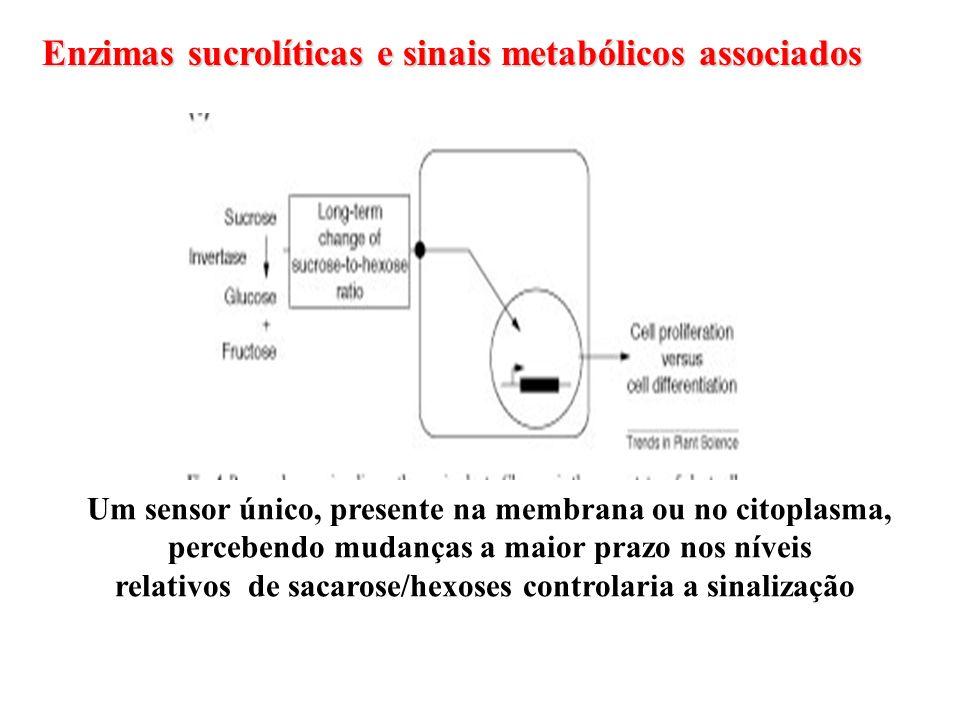 Enzimas sucrolíticas e sinais metabólicos associados Um sensor único, presente na membrana ou no citoplasma, percebendo mudanças a maior prazo nos nív