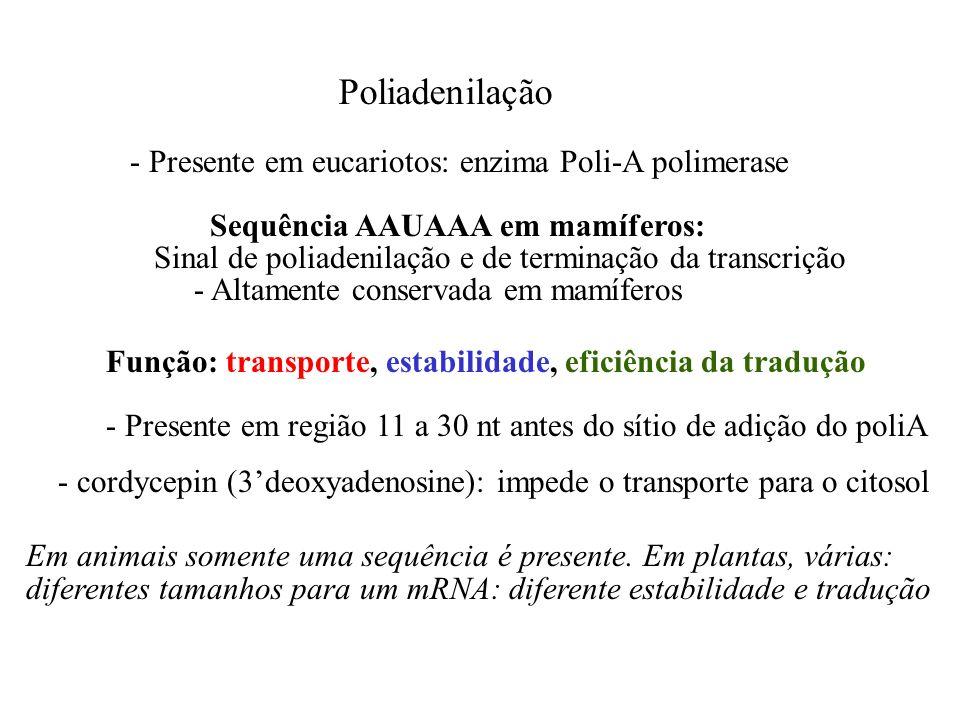 Poliadenilação - Presente em eucariotos: enzima Poli-A polimerase Sequência AAUAAA em mamíferos: - Altamente conservada em mamíferos - Presente em reg