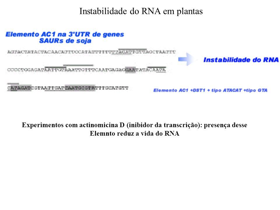 Instabilidade do RNA em plantas Experimentos com actinomicina D (inibidor da transcrição): presença desse Elemnto reduz a vida do RNA