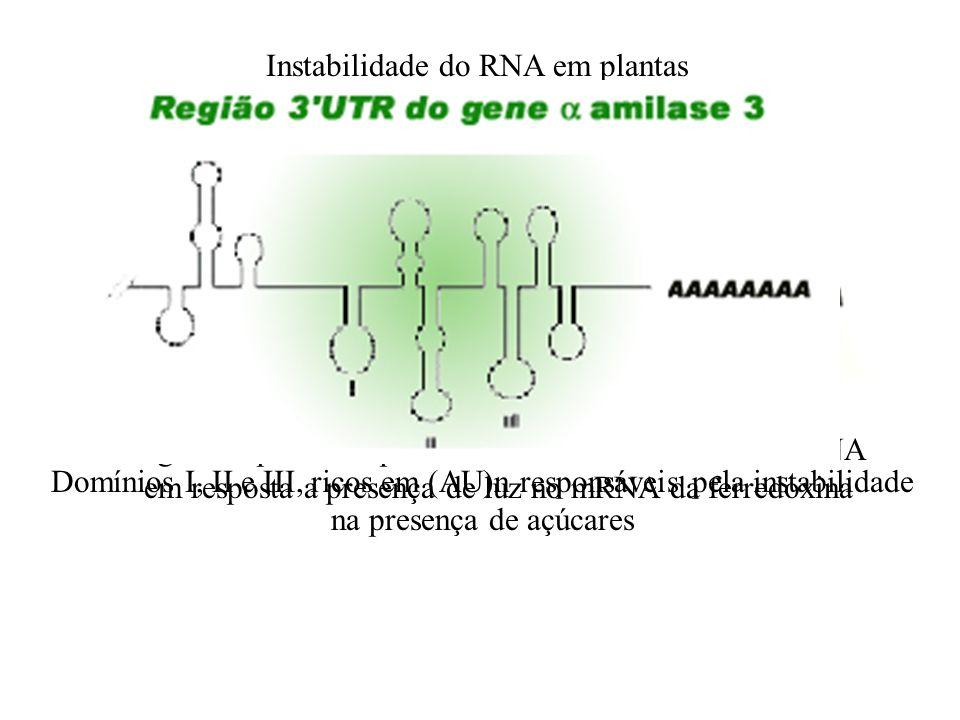 Instabilidade do RNA em plantas Erro de leitura da RNA polimerase II. Ex: gene da fitohemaglutinina Região responsável pelo aumento da estabilidade do