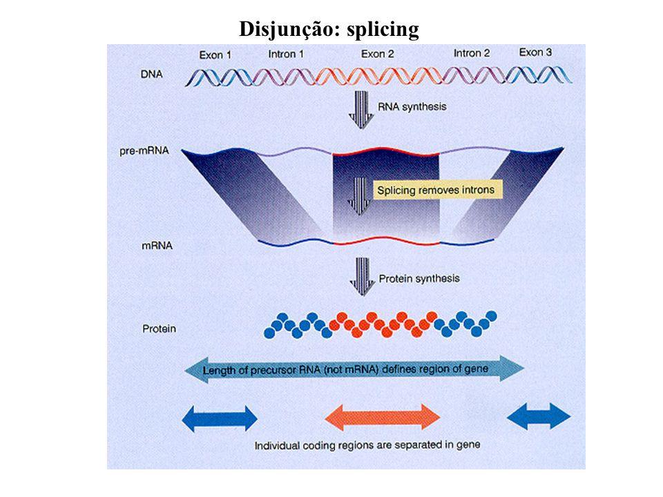 Disjunção: splicing