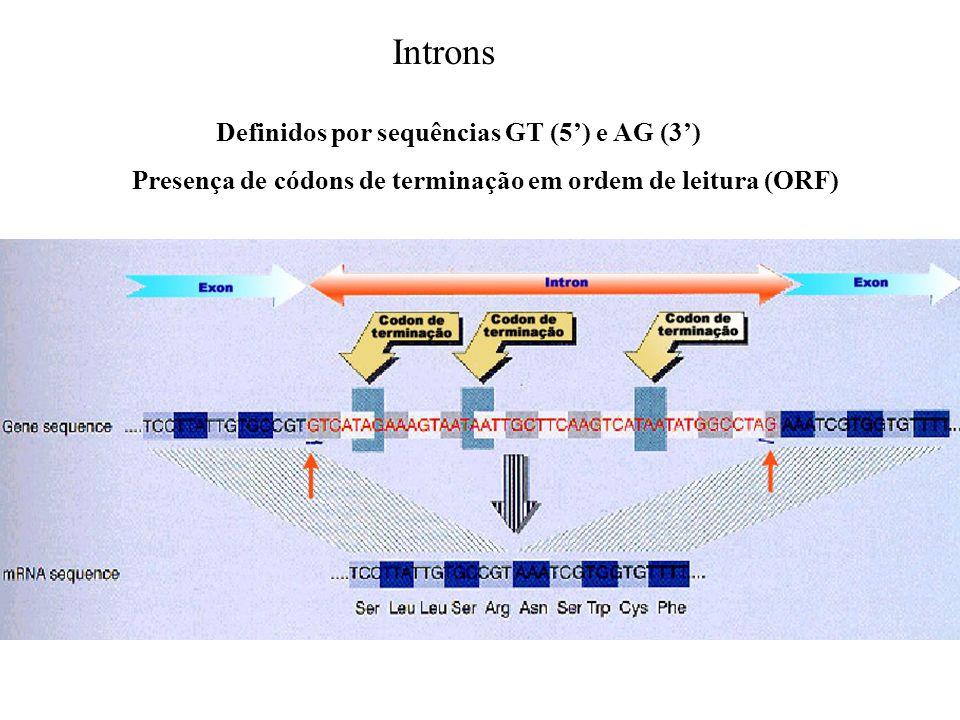 Definidos por sequências GT (5) e AG (3) Presença de códons de terminação em ordem de leitura (ORF) Introns