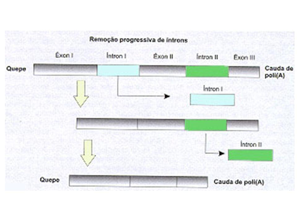 Mecanismo da disjunção: complexa interação entre proteínas