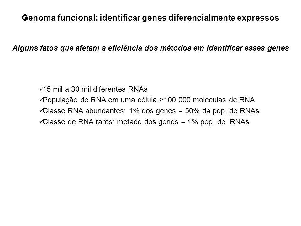 Genoma funcional: outras metodologias para identificar genes diferencialmente expressos Subtração de bibliotecas PCR supressivo mRNA fingerprint cDNA-AFLP CAP Trapper Limitações microarrays: Genes pouco expressos não são detectados Difícil separação da contribuição de diferentes isoformas de um mesmo gene Outros métodos