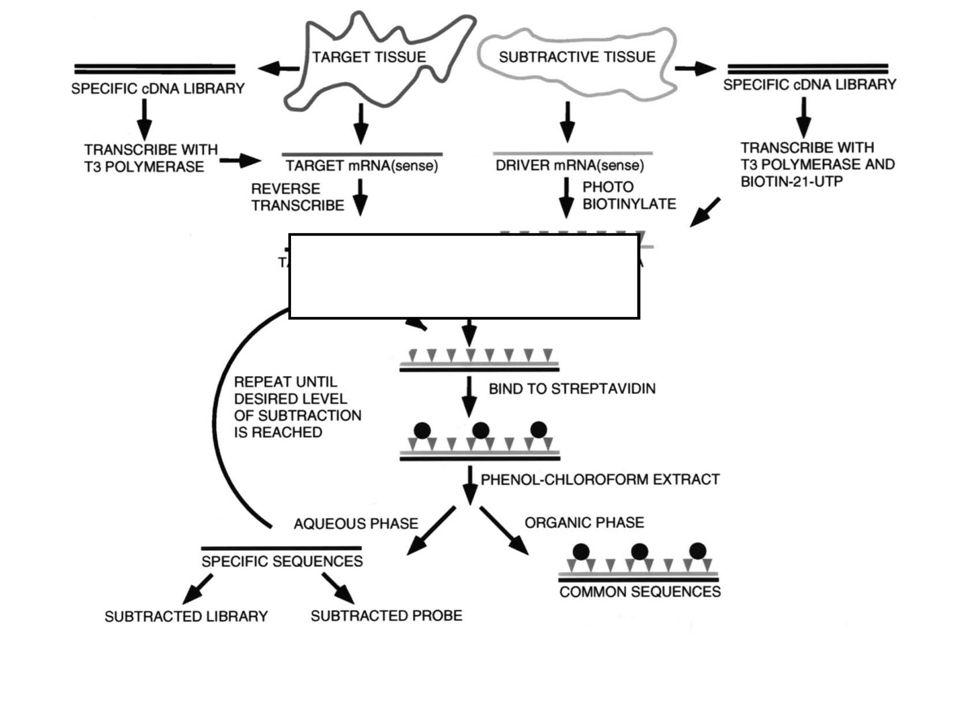 Genoma funcional: outras metodologias para identificar genes diferencialmente expressos PCR supressivo
