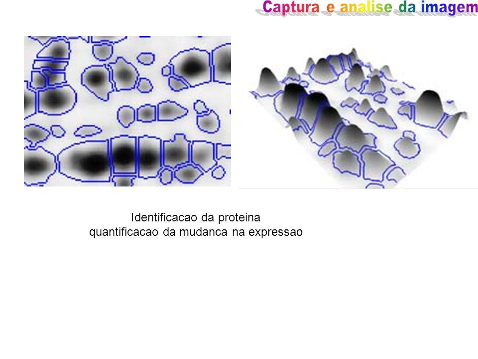 Identificacao da proteina quantificacao da mudanca na expressao