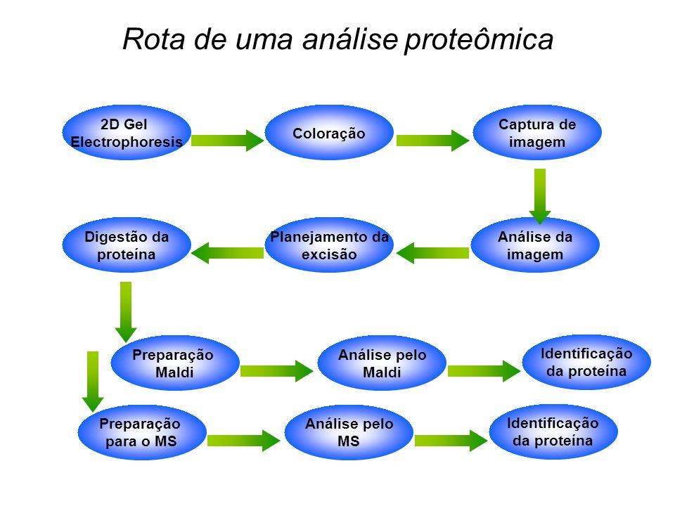 2D Gel Electrophoresis Coloração Captura de imagem Planejamento da excisão Digestão da proteína Análise da imagem Rota de uma análise proteômica Prepa