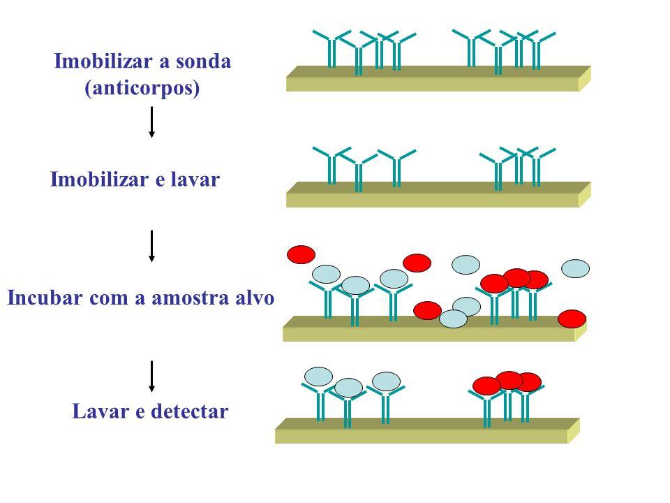 Imobilizar a sonda (anticorpos) Incubar com a amostra alvo Imobilizar e lavar Lavar e detectar