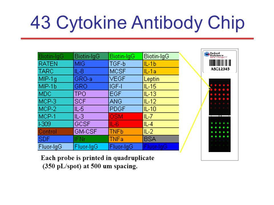 43 Cytokine Antibody Chip Each probe is printed in quadruplicate (350 pL/spot) at 500 um spacing.