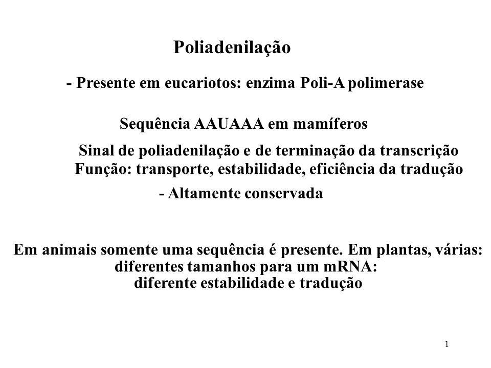 1 Poliadenilação - Presente em eucariotos: enzima Poli-A polimerase Sequência AAUAAA em mamíferos - Altamente conservada Sinal de poliadenilação e de