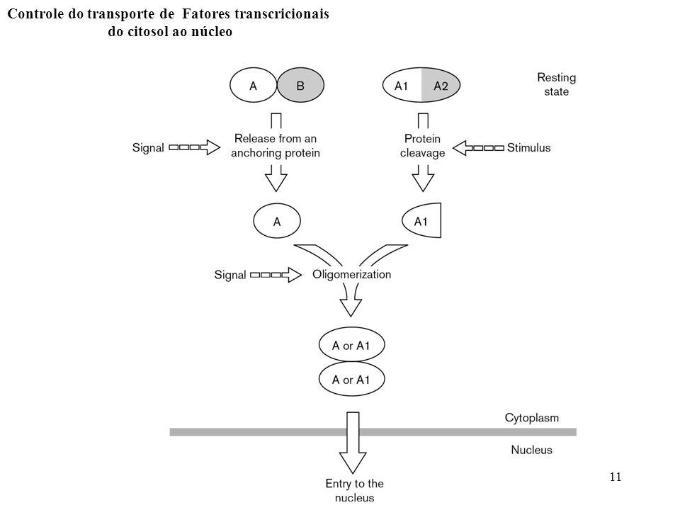 11 Controle do transporte de Fatores transcricionais do citosol ao núcleo