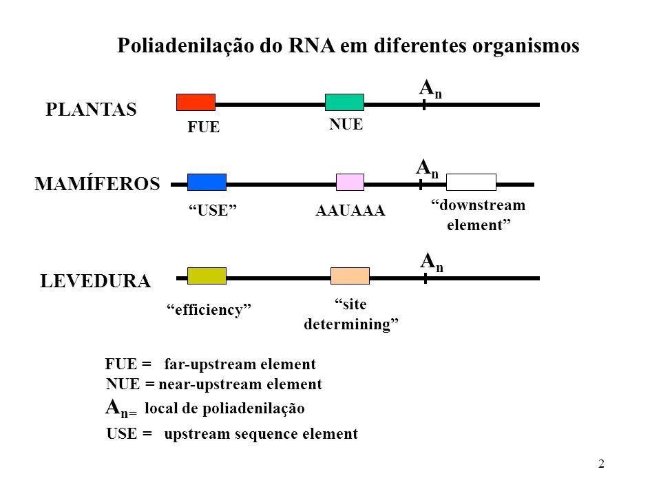 2 AnAn FUE NUE AnAn efficiency site determining AnAn USEAAUAAA downstream element Poliadenilação do RNA em diferentes organismos PLANTAS MAMÍFEROS LEV